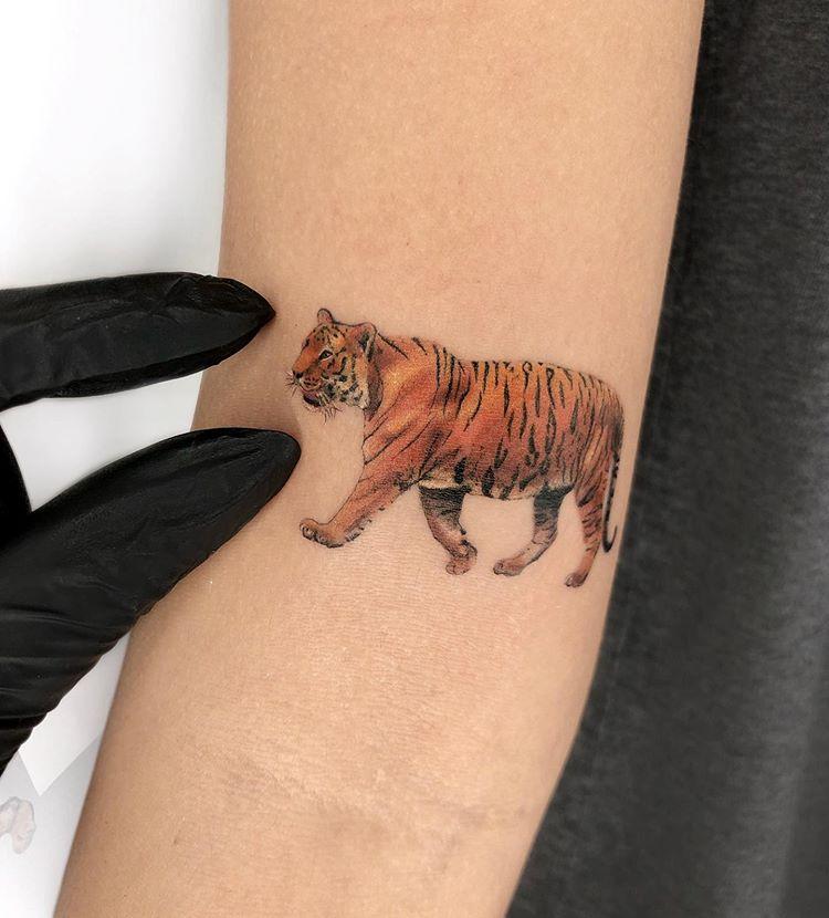 tattoo-tatuagem-tigre